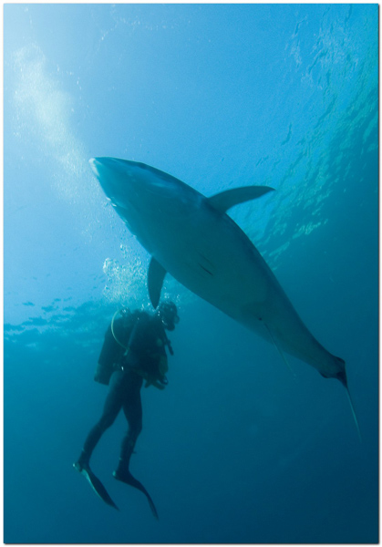 You are browsing images from the article: Dive with Tunas